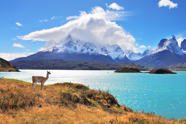 Südamerika, Argentinien, Provinz Tierra del Fuego Cerro Almirante Nieto, Patagonien, Torres del Paine National Park, Lama